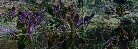 Manipulated colours of marsh plants