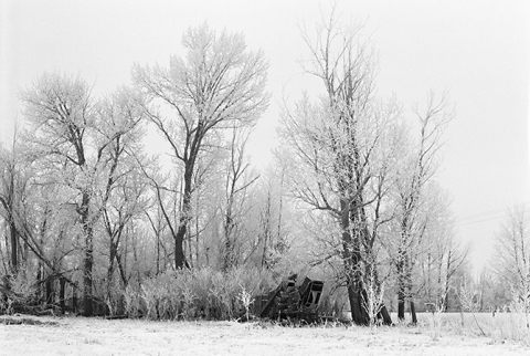 """Photograph of  """"Thresher in Trees"""" with haw frost"""