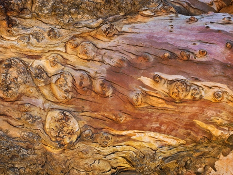 "Photo of Eucalyptus bark entitled ""Layers of Life #3"""