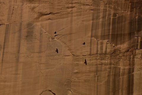 "Crows in flight along the cliffs of  Eastern Arizona ""Free Flight"""
