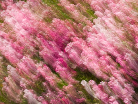 "Pink image captured with motion, entitled ""Obscured by Clouds"""