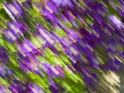 "Motion captured in Photograph entitled ""Purple Rain"""