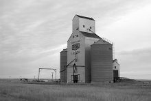 Wooden grain elevator at Lacadena, Saskatchewan