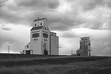 Wooden grain elevators at Webb, Saskatchewan