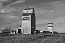 Image of wooden grain elevators at Pickardville, Alberta
